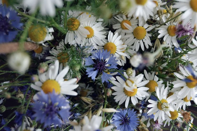 Flower Flower Head Close-up Plant Blooming Wildflower In Bloom Plant Life Blossom Petal Uncultivated