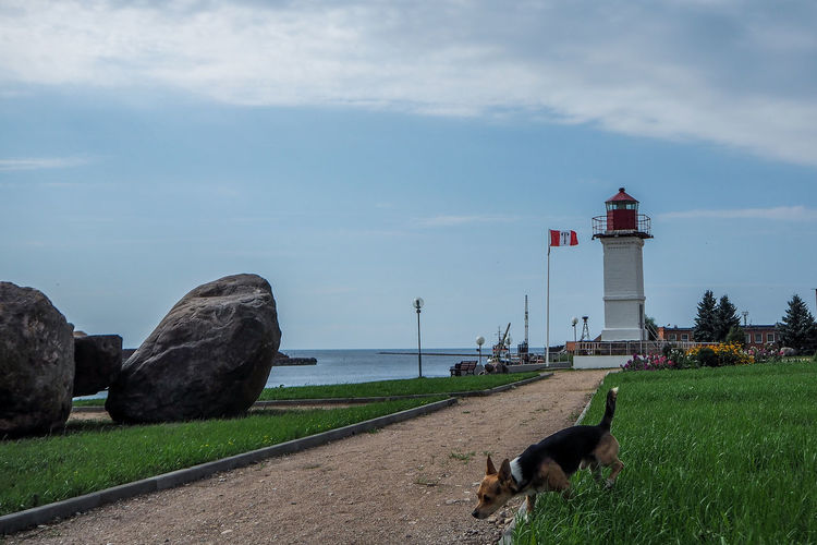 Baltic Sea Animal Themes Architecture Beauty In Nature Building Exterior Built Structure Cloud - Sky Day Dog Domestic Animals Grass Guidance Lighthouse Mammal Nature No People One Animal Outdoors Pets Protection Safety Salacgrīva Sea Sky Water
