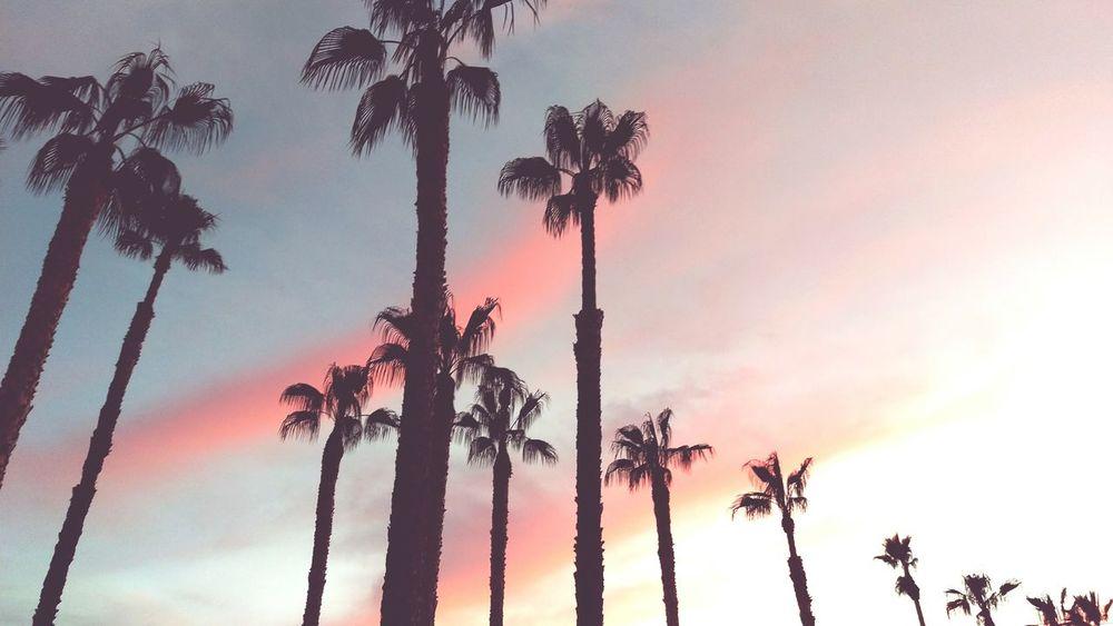 Palm Trees Sunset Sunsetporn California Love California Rainbow Sky Dusk Colours HTC_photography HTC One M9