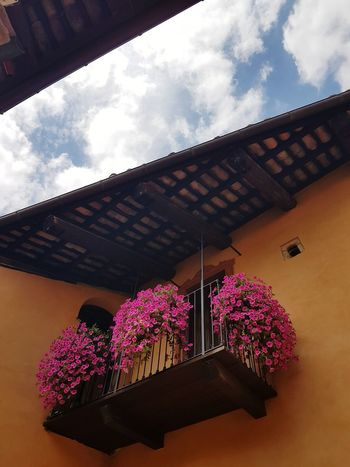 Flower Multi Colored Low Angle View Tradition Window Travel Destinations Architecture No People Plant Built Structure Sky Day Outdoors Summer Monforte D' Alba Langhe Langhe Italy Building Exterior Details Balcony