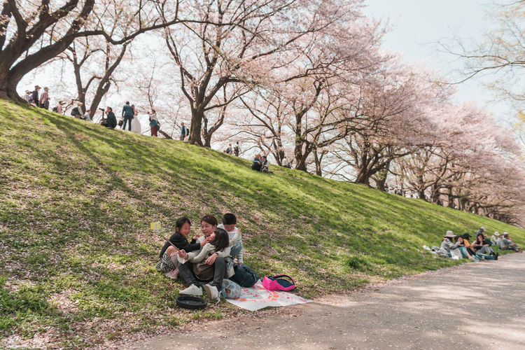 Kyoto, JAPAN - April 3, 2018: People enjoy seeing beautiful blooming cherry blossom at Yawatashi. Group Of People Plant Tree Grass Nature Women Men Day Park Full Length Casual Clothing Park - Man Made Space Real People Togetherness Sitting Adult Leisure Activity Child Lifestyles Childhood Outdoors Hanami Festival Hanami Picnic Travel Sakura Blossom