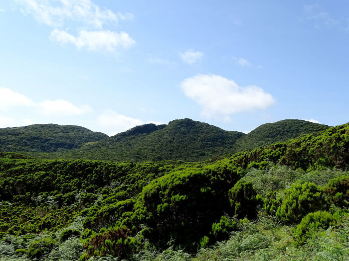 Beauty In Nature Tranquility Scenics - Nature Mountain Tranquil Scene Plant Landscape Environment Non-urban Scene Nature Idyllic Land Growth Tree Azores