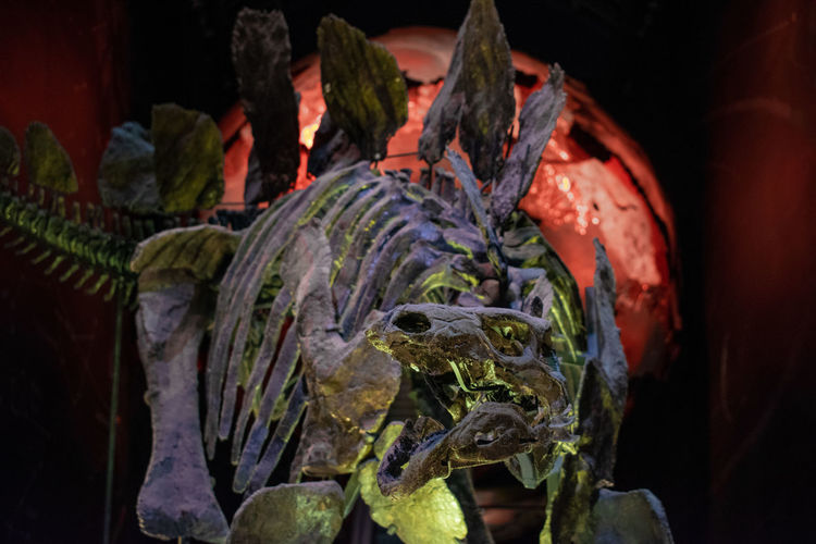 Animal Animal Body Part Animal Head  Animal Themes Animal Wildlife Animals In The Wild Art And Craft Close-up Creativity Day Focus On Foreground Indoors  Lizard Marine Mouth Open Nature No People One Animal Reptile Turtle Vertebrate