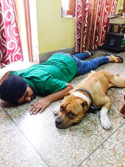 One is American pitbull and second is indian pitbull😂😂😂Both r sleeping😂😂😂😂😂 Hanging Out Check This Out Hello World Relaxing Enjoying Life Hi! First Eyeem Photo Taking Photos Beauty In Nature EyeEm Best Shots Bestshots Lovephotography  Nature Photography