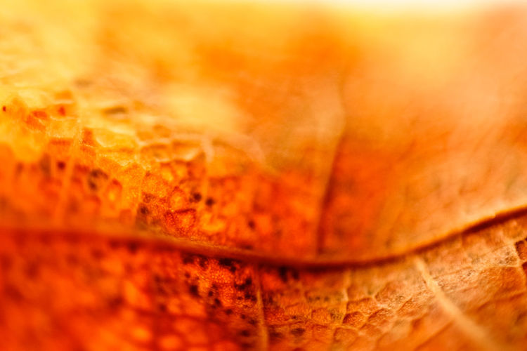 Autumn Backgrounds Close-up Day Leaf Maple Nature No People Orange Color Outdoors Selective Focus Textured