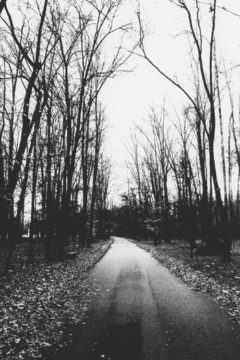 Loneliness Cold Winter B&w Biancoenero Blackandwhite Anxiety  Road Park Monza Canon1100d