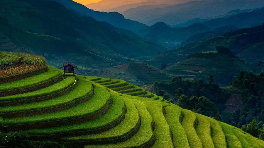 Scenic view of rice paddy