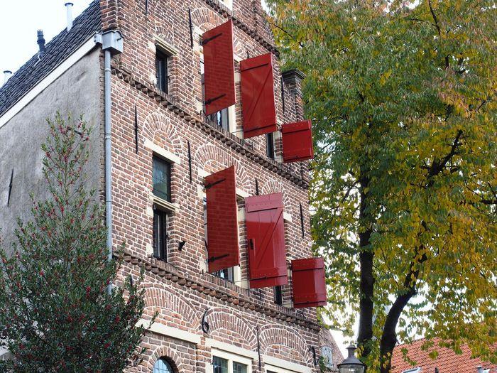 Architecture Built Structure Building Exterior Tree No People Ivy Outdoors Day ,Bergkwartier , Deventer , herfst,hanzestad
