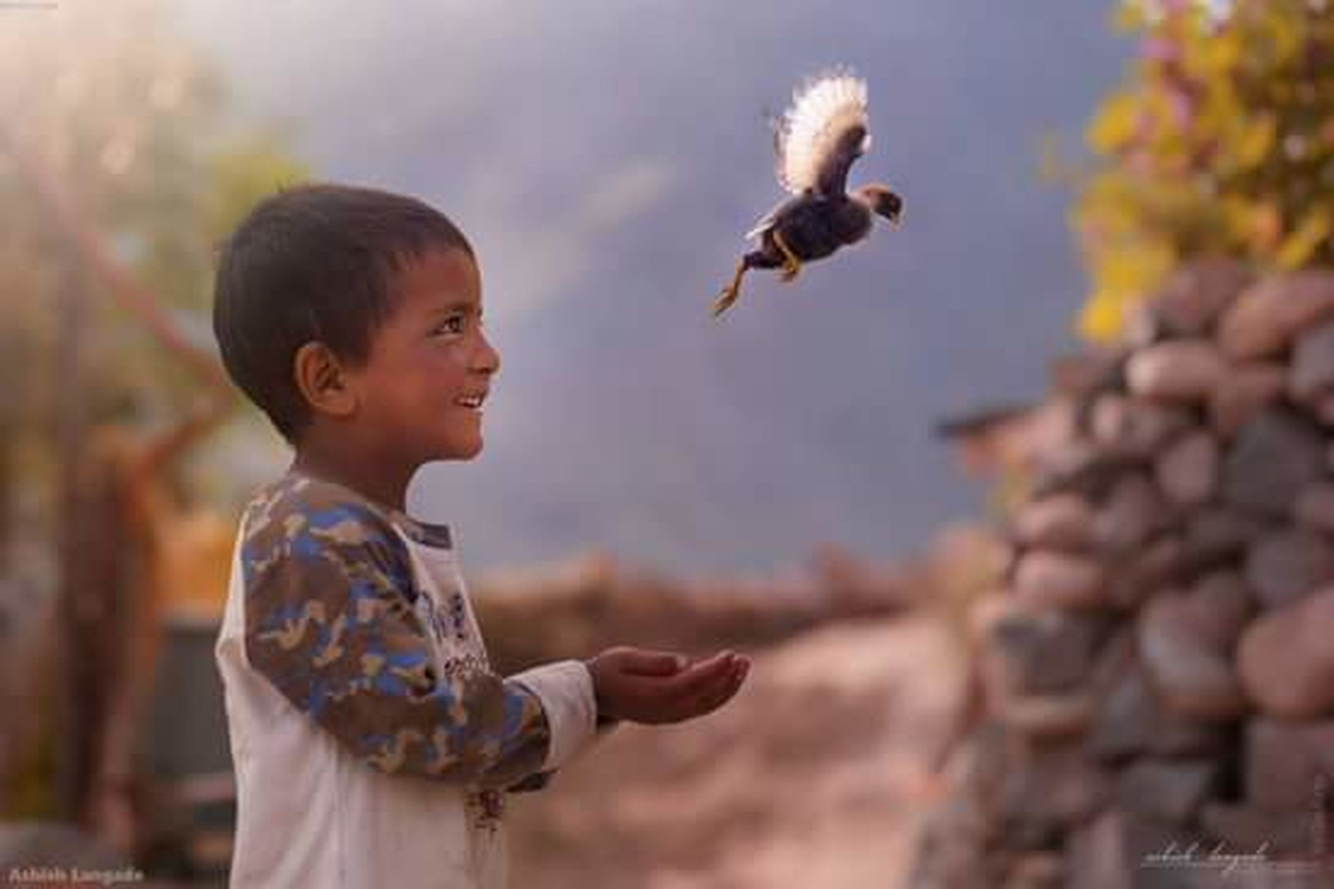 child, childhood, smiling, outdoors, one boy only, boys, bird, baby, cheerful, happiness, one person, people, animal themes, day