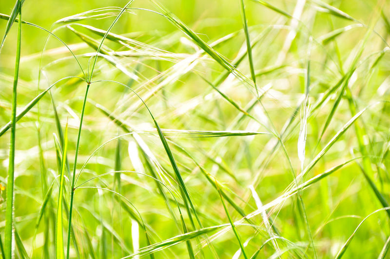 Close-up of grass growing on field