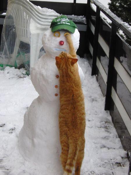 Cat my cat Building a Snowman 😄 Schneemann Snapshot