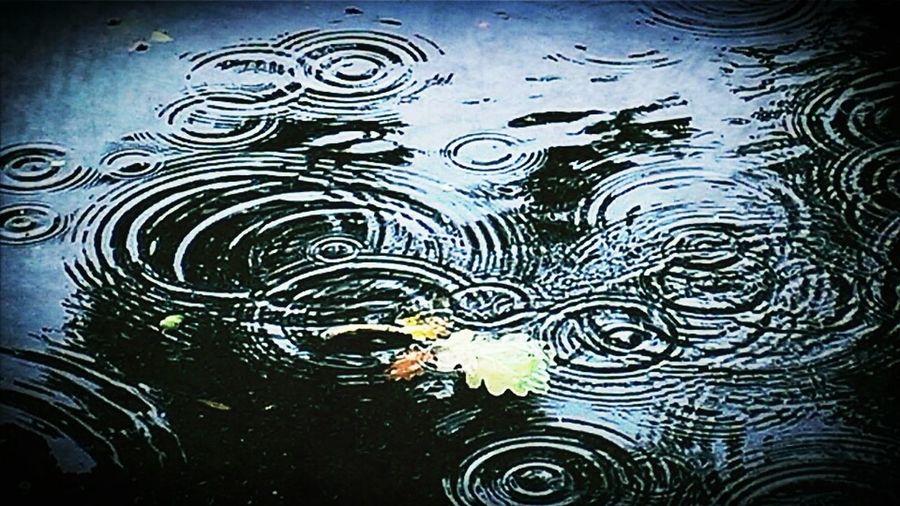 Water Rain Rainy Day Taking Photos December Rain Nature_collection Eye4photography