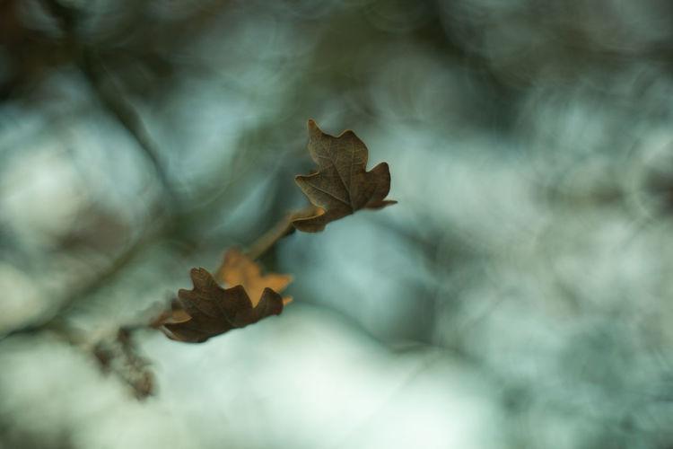 Leaf Leaves Branch Branches Tree Limb Bokeh