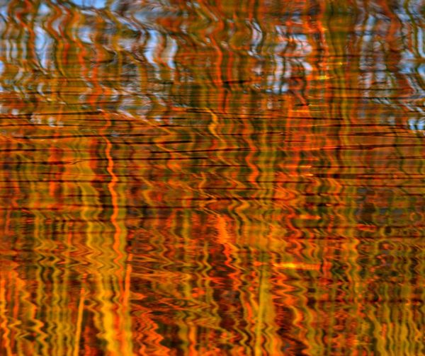 Double Exposure Abstract Grass Reflections and Sunset Reflections water reflections Ripples Tall Grasses Golden Moment Art Is Everywhere Cut And Paste