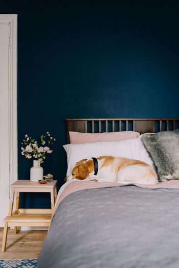 Beagle Bedroom Cosy Day Dog Domestic Animals Home Homely Indoors  Interior Design No People Pet Sleep Always Be Cozy