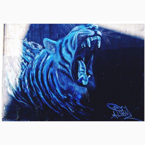 Melbourne Graffiti MelbournePhotographer Streetart/graffiti Street Photography Tigerpose