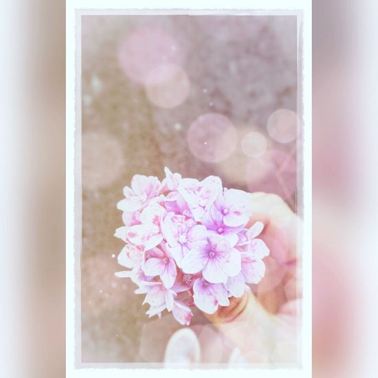 First Eyeem Photo EyeEmBestPics Eyem Gallery Eyemflowerlover Eyem Nature Lovers  EyeloveNature pinkf lower Pastel Power Flowerporn Flowerlovers Flowerpower Hydrengea Wishes Notallwhowanderarelost Journeyphotography Prayers EyeEm Wishing.. Wishing You Were Here Hope.✌ Imissyou Nostalgic  Memory Remembering Remembrance