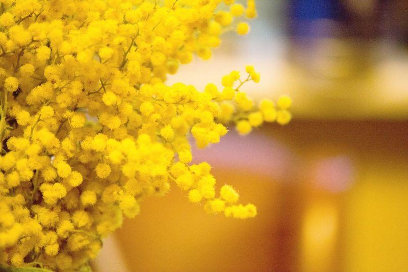 Happy Birthday dear Missy !!! I love you, my wonderful sister 🎈🌼🌼🌼🌼🌼🐝 Tadaa Community Flowers Mimosa Yellow