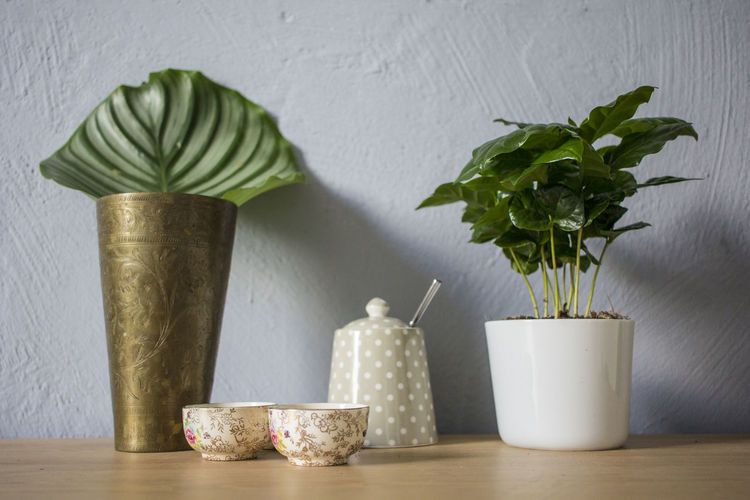 Decoration Home Interior Leaf Plant Potted Plant Still Life Table Vase Wall - Building Feature Wood - Material