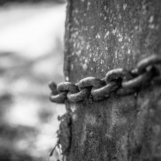 Chained to a stone http://www.rhme.de/chained-stone #nikon #d5200 #chain #noescape #animal #stonecold #fear #freedom Animal Freedom Fear Chain Nikon StoneCold D5200 Noescape
