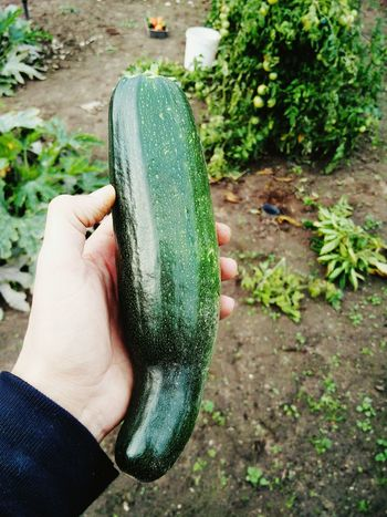 It's the last one. Home Grown Food Harvest Zucchini Grandmas House Nature Nature_collection Garden Gardening Countryside