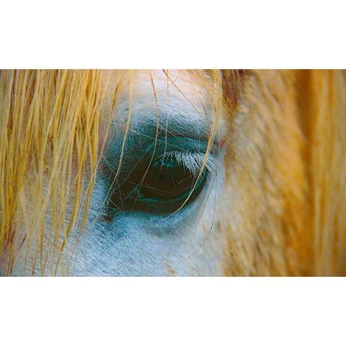 Cils Oeil Eye Horse Cheval Camarguais Eyehorse Yellow Jaune Bleu Blue White Blanc Sensitive Sensibility Sensibilité Sad Tristesse Look Regard