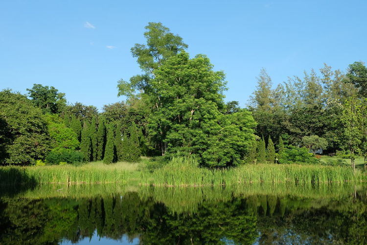 Tree Plant Water Tranquility Beauty In Nature Lake Tranquil Scene Sky Growth Reflection Scenics - Nature Green Color Nature Day Forest No People Waterfront Land Idyllic Outdoors Swamp