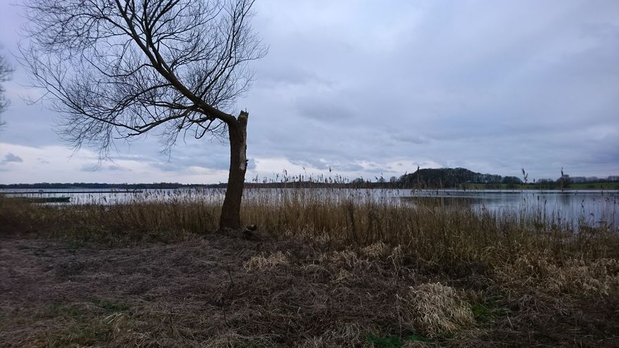 The tree. Klocksdorf Mecklenburg-Vorpommern Meckpomm Germany Ostdeutschland Lake Lake View Lakeshore Lakeside Tree Trees TreePorn Winter Gray Gray Sky Tristesse Melancholy Melancholic Landscapes Sad Sadness Rural Beauty Water Tree Lake Bare Tree Sky Grass Landscape Cloud - Sky