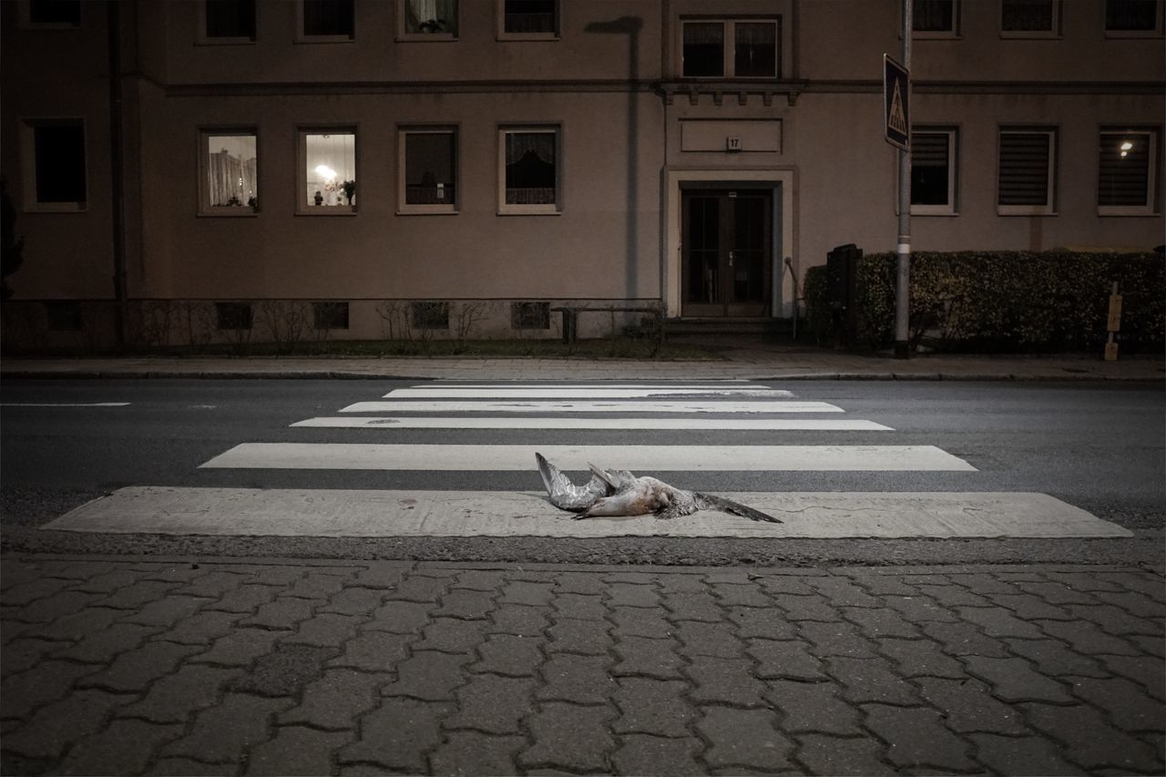 VIEW OF DOG ON STREET