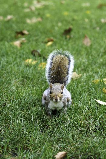 Squirrel on field