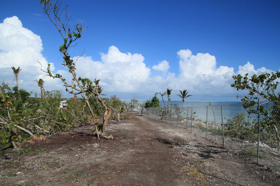 View of Bahia Honda Beach in Florida Keys after it was torn up by Hurricane Irma 2017, and is in a currently active state of recovery. Bahia Honda State Park Destruction Hurricane Irma 2017 Recovering Beach Beauty In Nature Cloud - Sky Day Florida Keys Growth Horizon Over Water Hurricane Damage Hurricane Irma Damage Landscape Nature No People Outdoors Palm Trees Recovery Scenics Sea Sky Torn Up Tranquil Scene Tranquility Tree Water