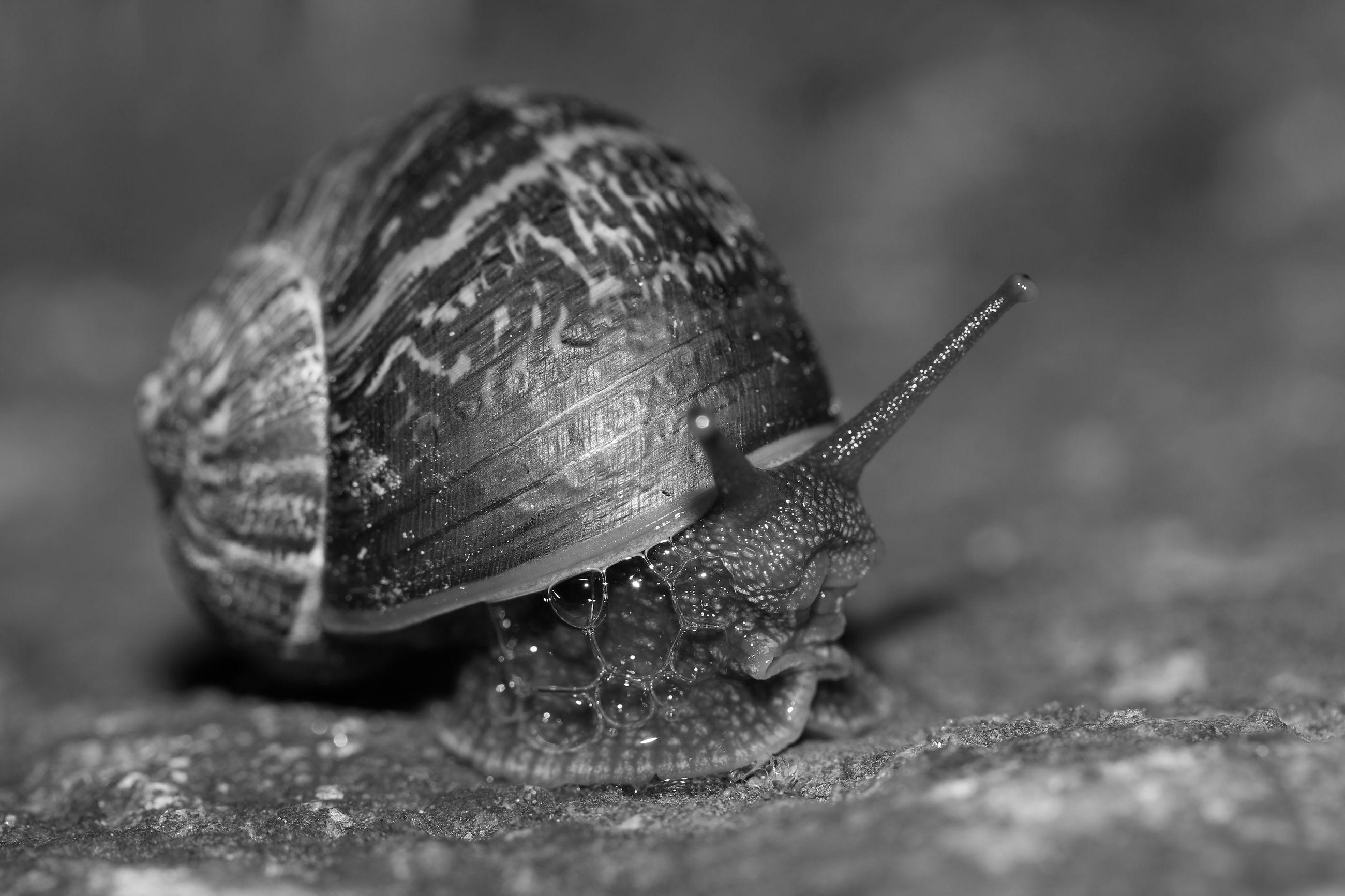 close-up, snail, selective focus, animal shell, focus on foreground, macro, extreme close-up, zoology, surface level, freshness, organic, nature, beauty in nature, day, mollusc, fragility, gastropod, crawling