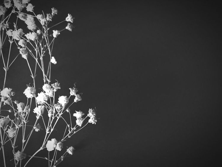 Black & White Dried Flowers Flower Babys Breath Fragility Nature Tranquility Beauty In Nature Texture Mood Lifestyle Feeling Room For Text Text Space Blog Style Bridal Simplicity Simple Beauty Floral Invitation Open Space