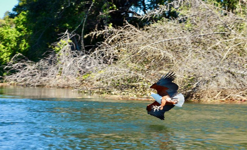 Eagle Action Day Enjoyment Fishing Eagle Full Length Lifestyles Nature Outdoors People Tree Water