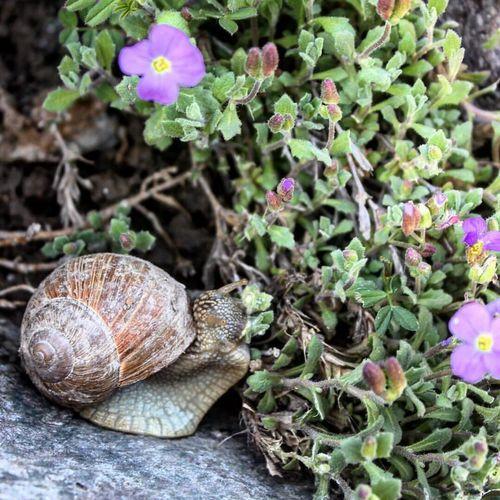 a cute 🐌 Snail