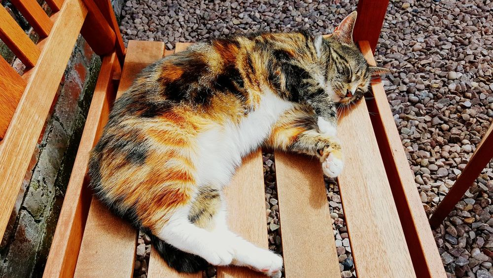 Cats Of EyeEm Catlover Catsoneyeem Relaxing Sunbathing Cat Garden Photography Taking Photos