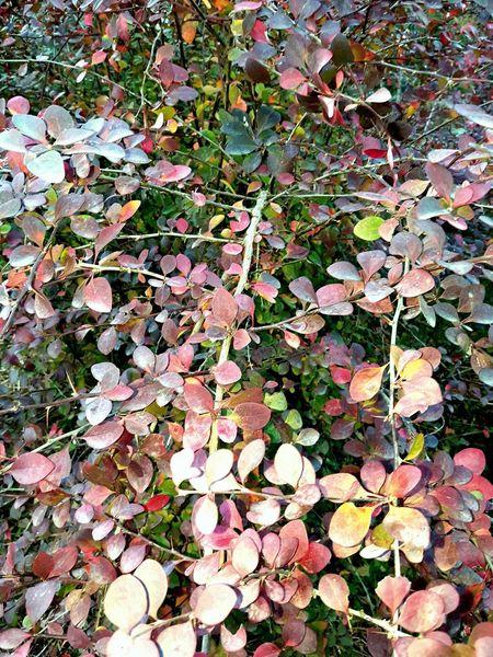 Istanbul Turkiye Sonbahar Yapraklar Yaprakdokumu Nature Beauty In Nature Tree Yaprak Ve Mevsim Mevsimler Mevsim Mevsimsonbahar Mevsimlik Sonbaharyaprakları Sonbaharıngüzelliği Nature Aralık Kadıköyistanbul Istanbul Kadıköy