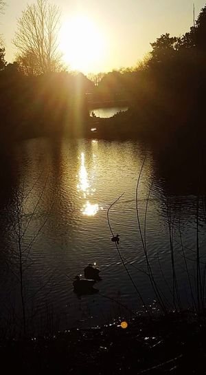 Sunset Reflection Nature Sun Tree Water Silhouette Plant Lake Beauty In Nature Social Issues Outdoors Sky No People