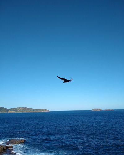 Airplane Water Clear Sky Sea Blue Aerospace Industry Air Vehicle Silhouette Mid-air