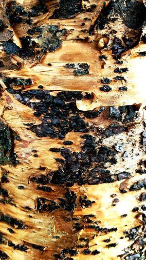 Tree Trunk Tree Burk