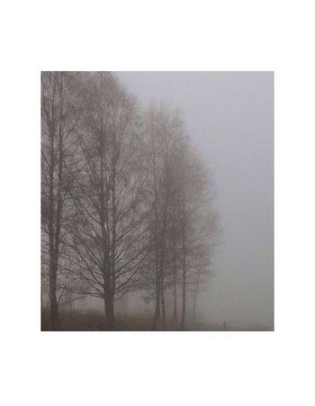 Chasing Fog Tree Portrait Minimallandscape Diversed Grey