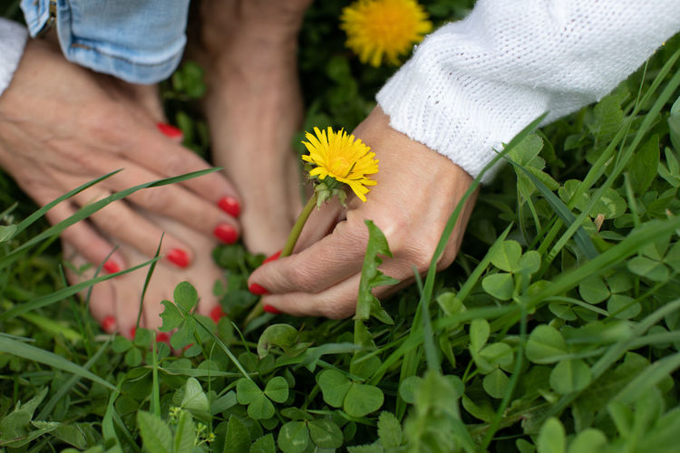 Low section of woman crouching by flower on grass