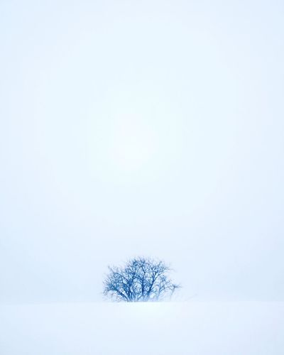 Tree Snow Plant Winter Cold Temperature Copy Space Nature No People Bare Tree Beauty In Nature White Color Day Tranquil Scene Environment Tranquility Land Field Sky Scenics - Nature Outdoors