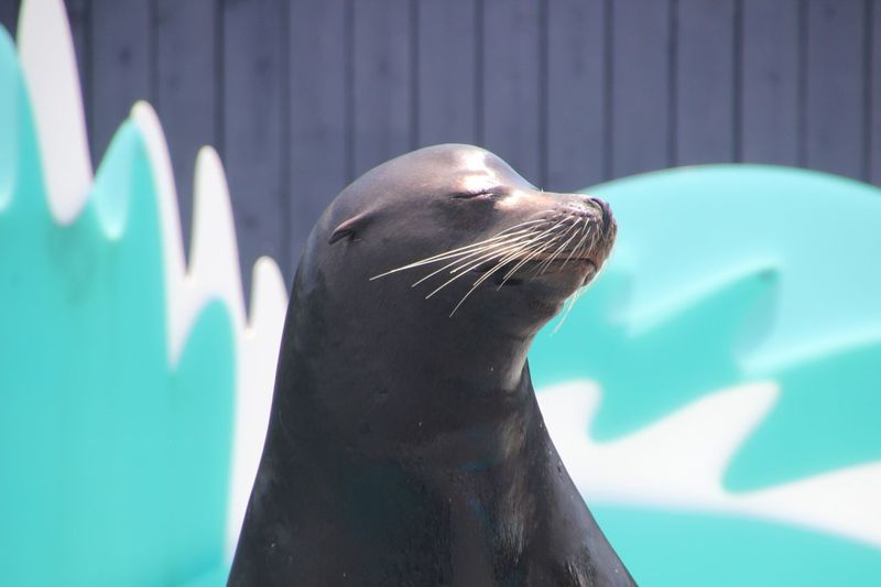 EyeEm Selects Animal Themes One Animal Sea Lion (seal?) Mugging For The Camera Close-up No People