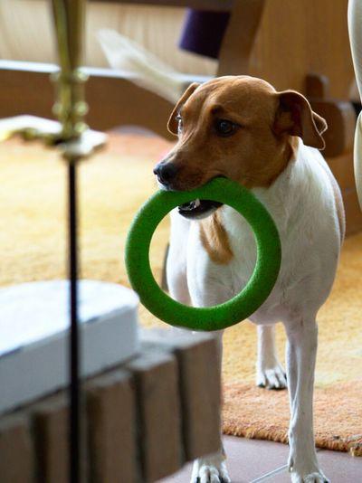 Dogs Dog My Dogs Are Cooler Than Your Kids Dansk-Svensk Gårdshund