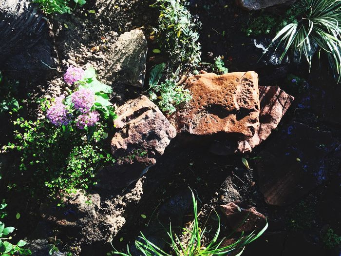 Rock - Object Nature Rock Formation Day Outdoors No People Beauty In Nature Sunlight High Angle View Water Tranquility Plant Tree Garden Photography Growth Plant Beauty In Nature Nature Plants And Flowers Plants Gardening Tranquility Green Color Rock