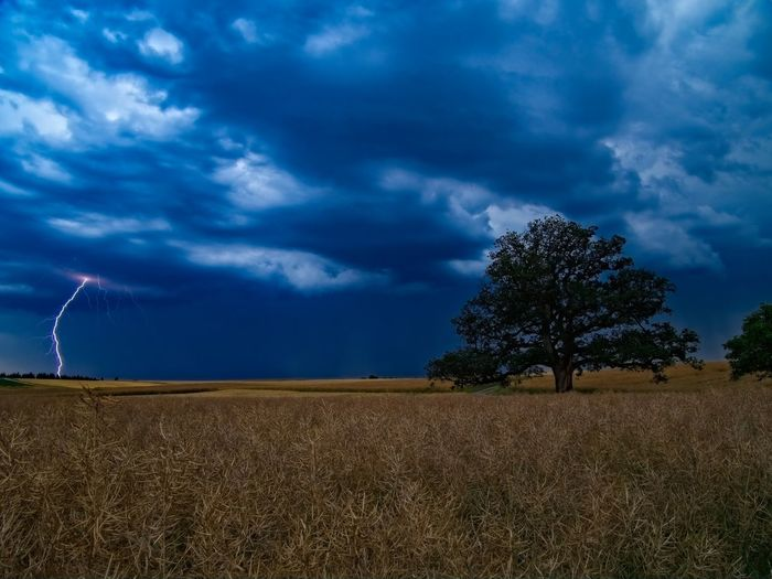 manna esch- lightning far__ Dramatic Sky Germany🇩🇪 Magnificent Rheinland-Pfalz  Weather Weather Photography Beauty In Nature Canola Field Cloud - Sky Clouds & Sky Countryside Eifel Landscape Landscape_photography Lightning Lightning Bolt Mirrorless Nature Nature_collection No People Oak Tree Olympus Om-d E-m10 Outdoor Photography Thunderstorm Tree_collection