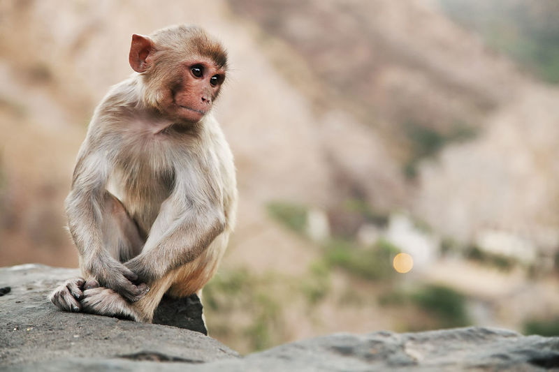 Monkey sitting on rock at temple