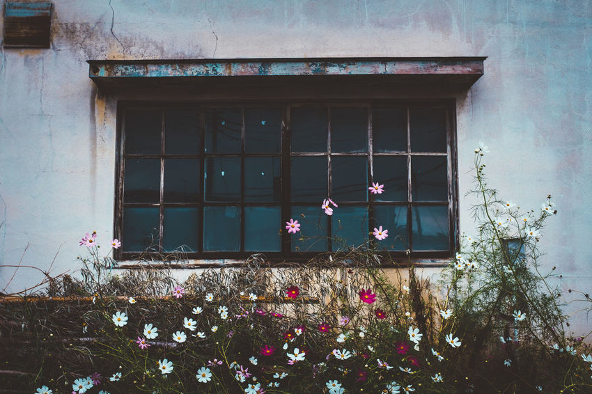 Architecture Building Building Exterior Built Structure Day Flower Flowering Plant Fragility Glass - Material Growth House Low Angle View Nature No People Outdoors Plant Residential District Tree Wall - Building Feature Window Window Frame
