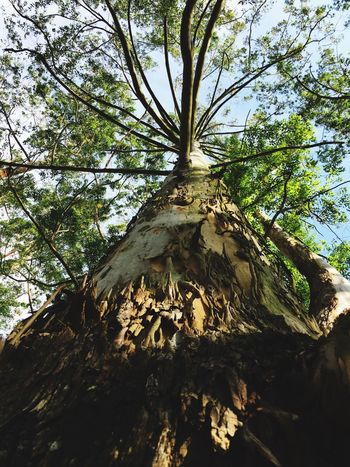 Arvore Tree Low Angle View Growth No People Beauty In Nature Tree Trunk